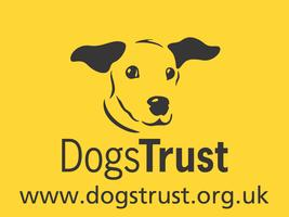 The World Through Their Eyes - Dogs Trust Manchester