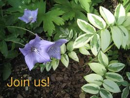 June Blooms!  A Garden Tour