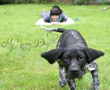 Charlotte Steele of My Happy Dog Ltd logo