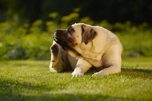 The Five Best Solutions for Your Pet's Allergies