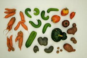 CulinARy MiSfiTs Gemüsewerkstatt Tour - Berlin Food...