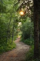 River Valley Medicinal Plant Walk with Robert Rogers...