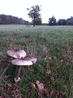 An introduction to foraging & mushroom hunting