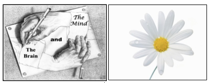 Paying Attention to Attention: A Mindful Awareness...
