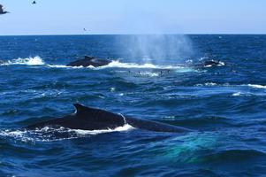 Sunday Morning Eco Sail: Marine Wildlife and Marin...