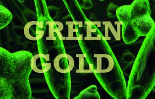 Green Gold: Algae's Amazing Creative and Economic...