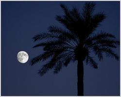 Free Moonlight Yoga at Fairchild
