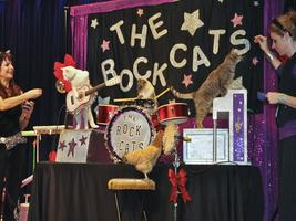 The Amazing Acro-Cats Swing in Saugatuck Michigan!