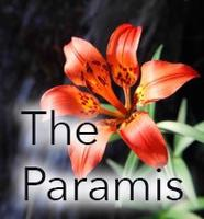 The Paramis (Online Course)