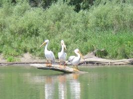 Memorial Day Sacramento River Clean Up