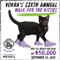 VOKRA's 6th Annual Walk for the Kitties