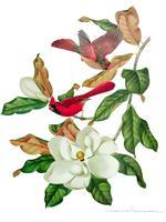 Mothers and Magnolia Tea