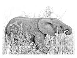 Prepping For Safari with Graham Hobart