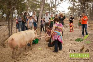 Little Oak Sanctuary - September Open Day - Wine,...