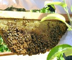Pollinator Garden Planning