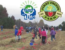 The Great Harvest Festival