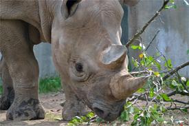 World Rhino Day Tour 2015 - 1