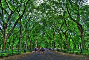 Gay Social Walking Tour: Central Park