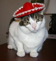 Cinco De Meow and Barks Too! Pet Adoption event!