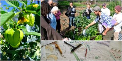 Intro to Permaculture: Oct 2013: Sydney
