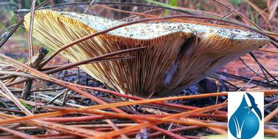 "Fungi/Mushroom Hunt with Ben ""Mykes logos"" Dion"