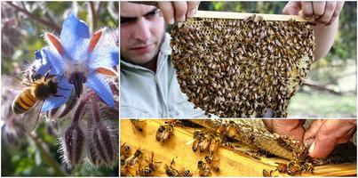 Natural Beekeeping: Feb 2014: Sydney