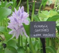 Extraordinary Flora