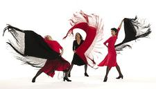 Zorongo Flamenco Dance Theatre logo