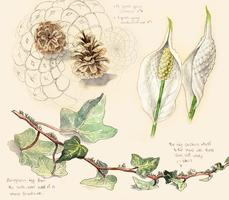 Botanical Drawing Workshop with Kathryn Chorney