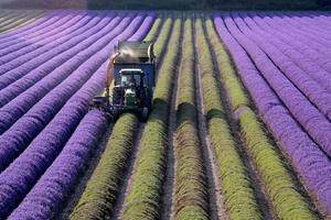 From Hops to Lavender: a Discovering Britain walk through the...