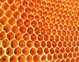 Bee Basics: Building a Bee Hive