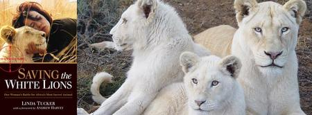 Saving the White Lions Fundraiser