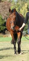Equine Evaluation & Conformation Workshop