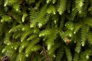 Discovering Bristol's moss diversity