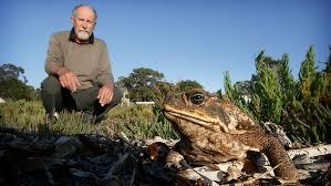 Wild Things: Talking frogs with Dr Arthur 'frog man'...