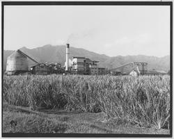 The History of Waialua Sugar Company