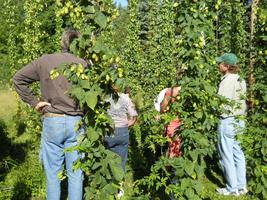 July Hop Yard Tour