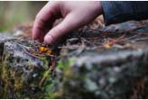 Medicinal Wild Plants: A Glen Park Tour Saturday July 13th