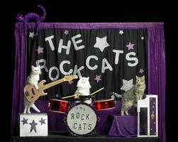 The Amazing Acro-cats Phrolic in Philadelphia!