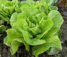 Beginner's Guide to Growing Organic Vegies and Herbs