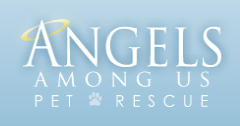 Stella and Dot Trunk Show to BENEFIT ANGELS AMONG US...