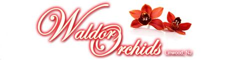 Waldor Orchids June Open House Event