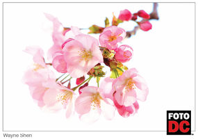 Exhibition Opening at Cherry Blossom Central - Edison...