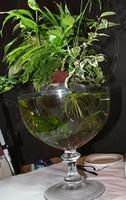 Reminder: Hydroponics Plants for House Ecosystem...
