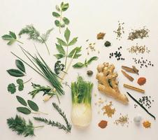Top Ten Favorite Herbs