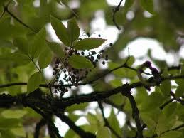 Walking With Poets - Elder - Growing New Poems from...