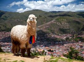 Go Eat Give - Destination Peru