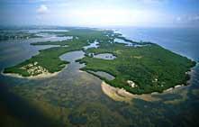 Paddling Coastal Clean Up