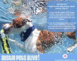 Underwater Dog Photo-Shoot