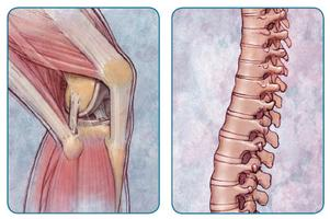 All About Orthopaedics XII